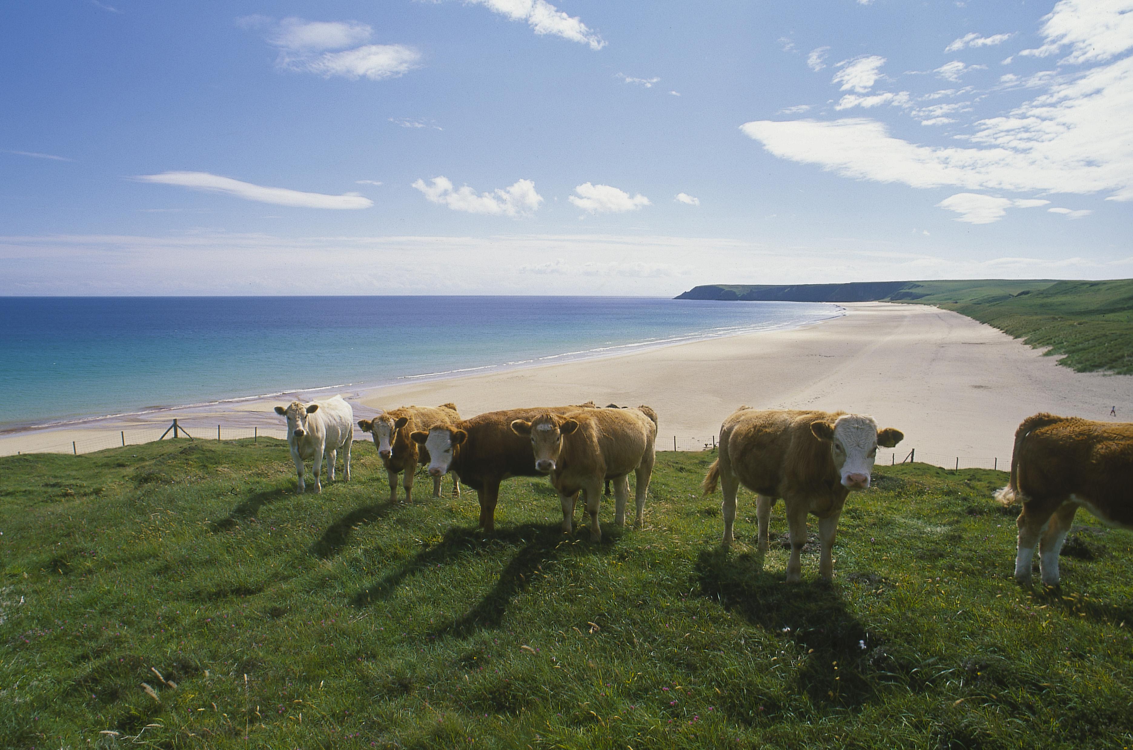 Reistips Schotland - Schotse eilanden - Lewis