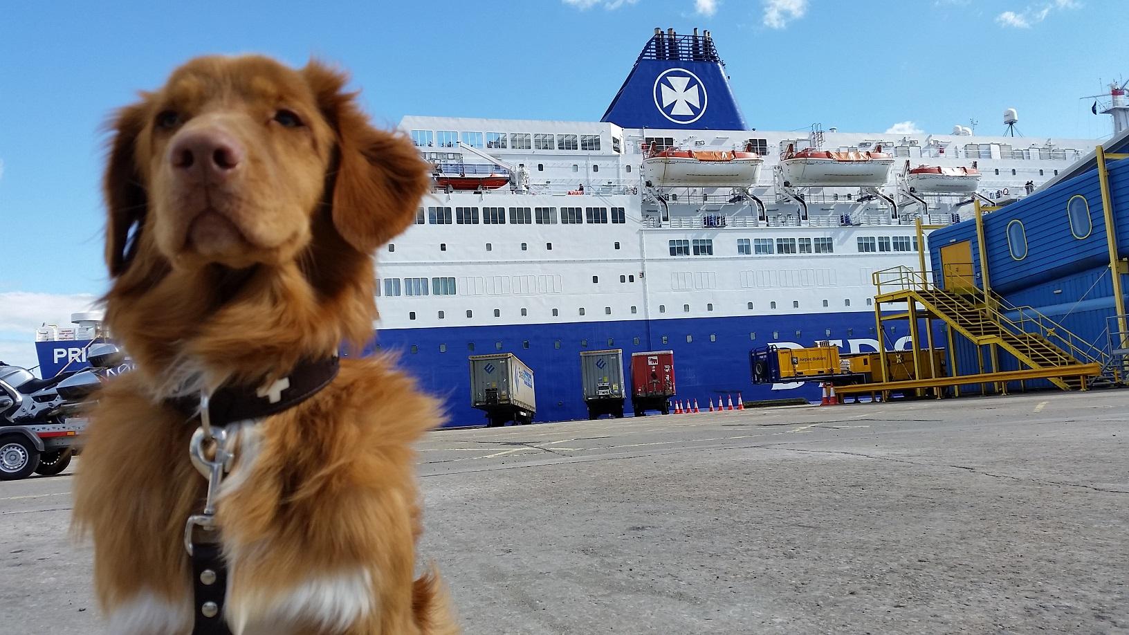 Met de hond naar Engeland