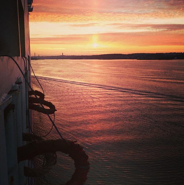 Begonia Seaways op Instagram