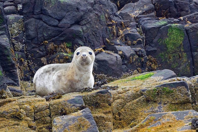 Zeehonden spotten op de Farne Islands