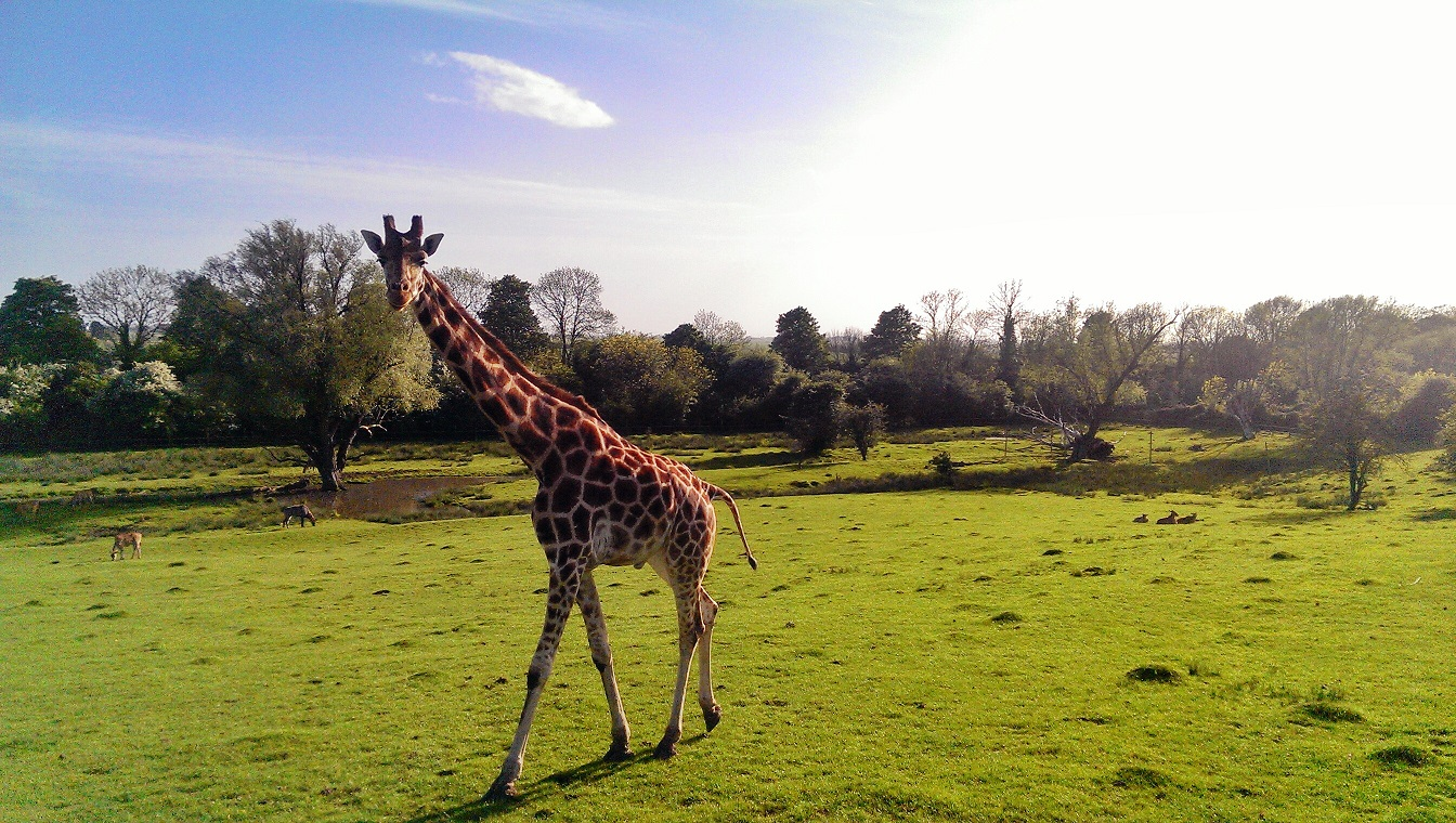 Op Safari in Port Lympne