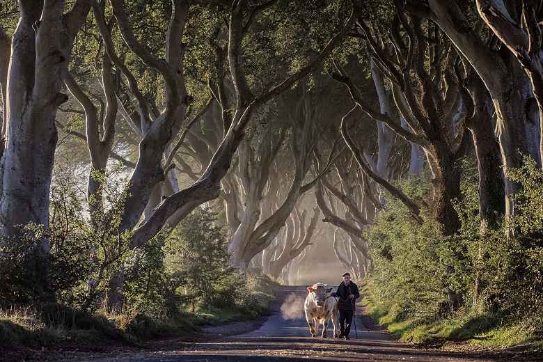 The Dark Hedges figureerden in Game of Thrones als The King's Road