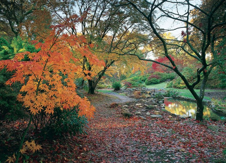 Exbury Gardens in New Forest, Hampshire