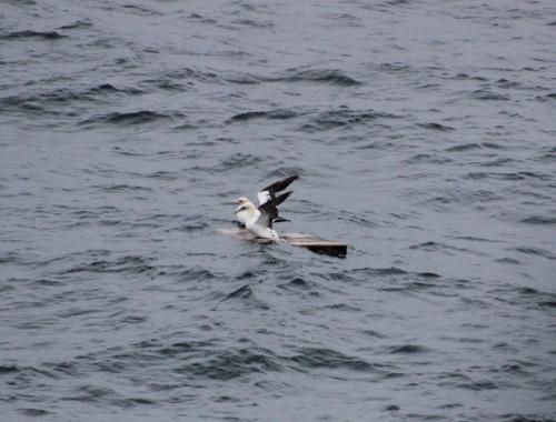 Vogels spotten in de Noordzee