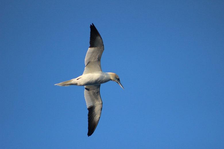 Vogels spotten op de Noordzee